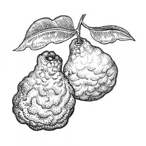 Large image of Bergamot Pure Essential Oil