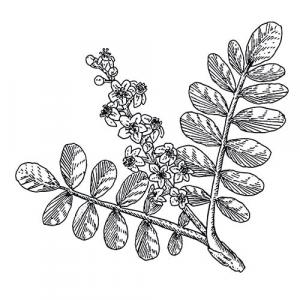 large image of frankincense essential oils unlabelled