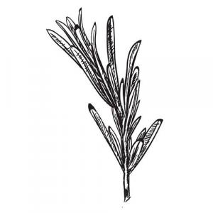 Large image of Rosemary Pure Essential Oil