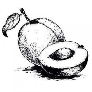 Large image of Apricot Kernel Carrier Oil
