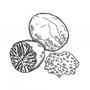Large image of Nutmeg Pure Essential Oil