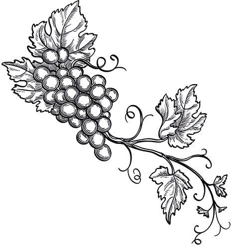 grapeseed carrier base oil for aromatherapy use vitis vinifera Grape VATS Fibergalss grapeseed carrier oil vitis vinifera